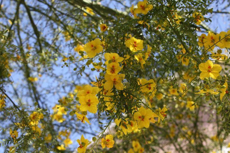 Arizona 09 004