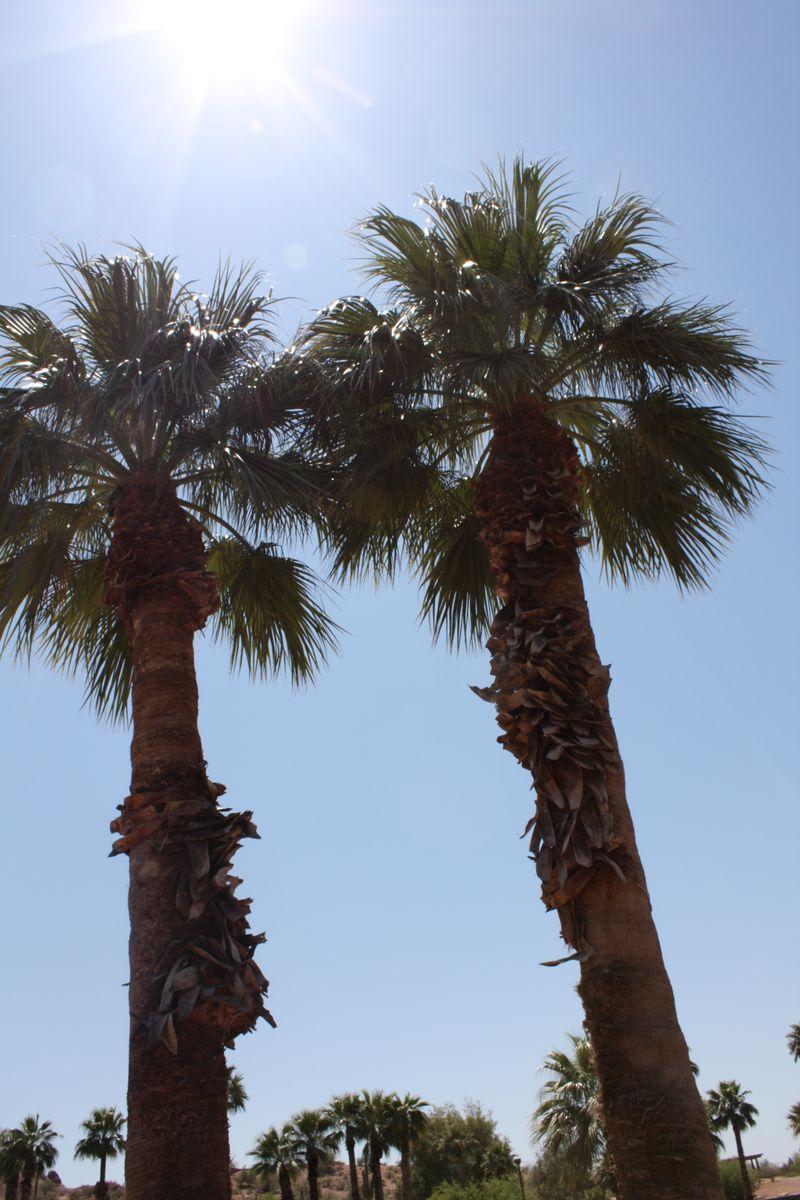 Arizona 09 132