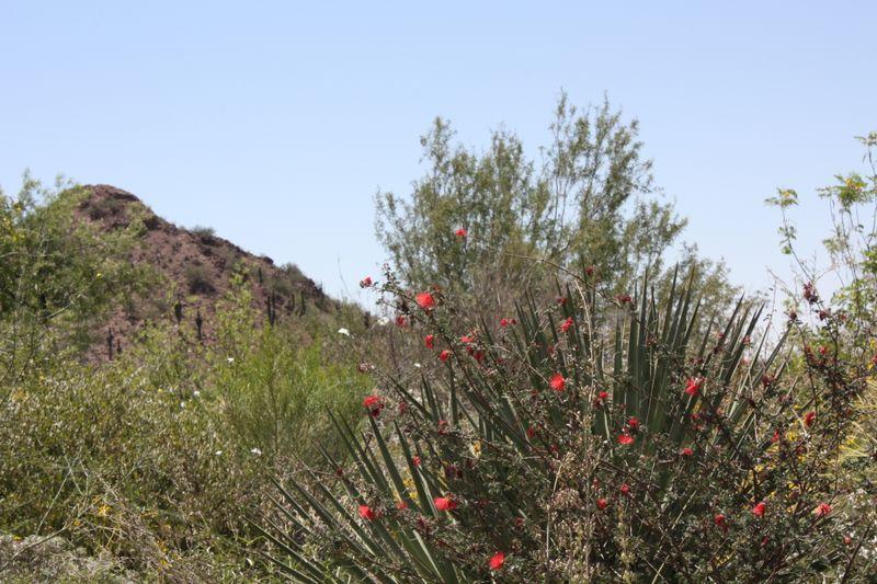 Arizona 09 277