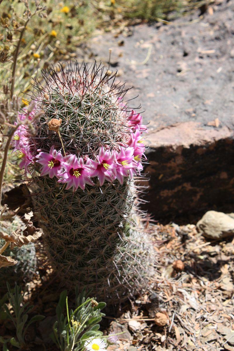 Arizona 09 401