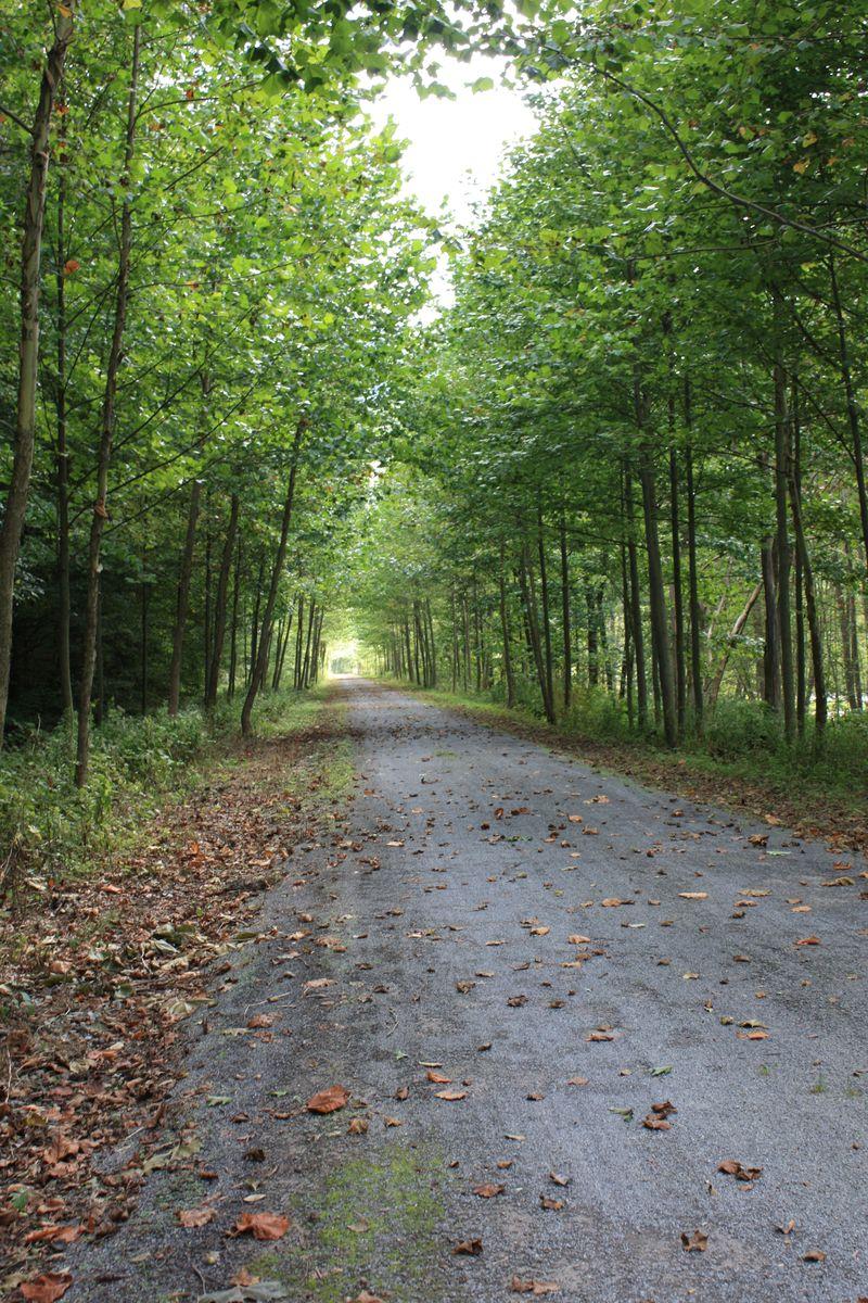 Rail Trail Sept. 09 019