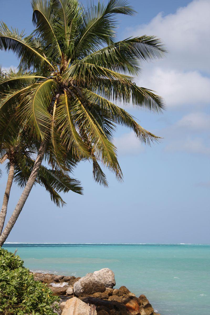 Bahamas 2010 097