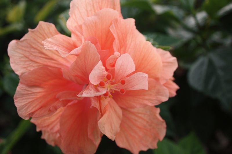Bahamas 2010 397